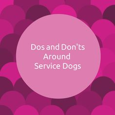 #dogs #ServiceDogs #Pets #petcare #Petbucket
