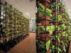 Verde en las paredes: jardines verticales de Schiavello - DecoraHOY