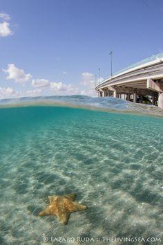 Blue Heron Bridge Underwater