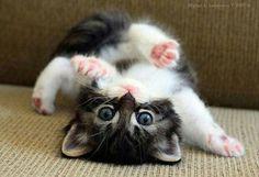 Cute  poes/kat