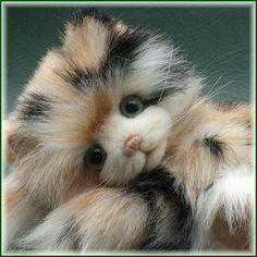 Mursick the Kitty Cat By Teddy Kingdom - Bear Pile