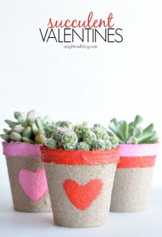 Valentine succulents - an alternative to traditional roses.