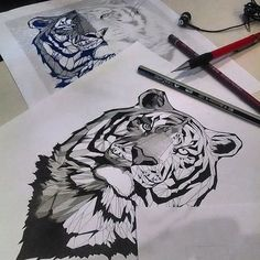 Trabajo personal en desarrollo. Tiger, sketch, draw: