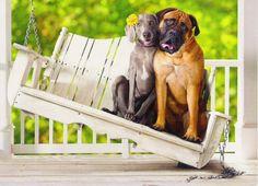 Hunde an einer Schaukel auf der Veranda