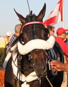 Scioto: Wiggle It Jiggleit back for more in Ewart Memorial | Daily Racing Form