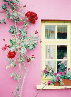Red Roses at Grannys Kitchen in Carlow Ireland   photography by http://www.jenhuangblog.com/