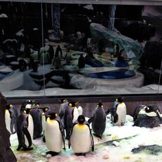 A look at the Antarctica: Empire of the Penguins attraction from the Penguins Up Close Tour at SeaWorld Orlando