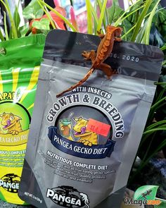 A complete gecko diet, Pangea Gecko Diet Breeding Formula is designed to fulfill the unique requirements of reproductive crested geckos. The main source of fat and protein in this food is from Insects (crickets and black soldier fly larvae) while remaining palatable and well-liked by almost all geckos. The fruits used are a delicious blend of Bananas and Apricots that creates a feeding response similar to our other formulas.  #MagazooReptiles Gecko Food, Black Soldier Fly, Crested Gecko, Crickets, Reptile Accessories, Geckos, Bananas, Reptiles, Insects