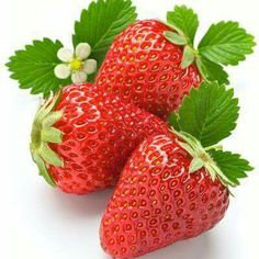 What Human Foods Can Dogs Eat? Strawberry Pictures, Strawberry Art, Strawberry Kitchen, Fruit And Veg, Fruits And Vegetables, Fresh Fruit, Vegetable Pictures, Garden Labels, Fruit Photography