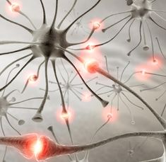 Sanford-Burnham researchers convince transplanted stem cell-derived neurons to direct cognitive function—getting us a step closer to using these cells to treat Alzheimer's disease and other neurodegenerative conditions. Fibromyalgia Causes, Chronic Pain, Endometriosis, Epilepsy Symptoms, Epilepsy Drugs, Treating Fibromyalgia, Epilepsy Awareness, Neuroplasticity, Neuroscience