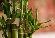 Com o Feng Shui, técnica chinesa de harmonização de ambientes, e a ajuda das flores e folhagens, você renova a energia do seu lar e atrai saúde, prosperidade e harmonia para sua vida.