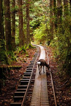 Yakushima, Japan.  So beautiful and peaceful . . . yet at the same time I worry a train is going to come around the corner.
