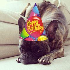 Happy Birthday Maximus!  #Padgram