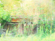 竹藪にある廃墟。