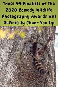 #Finalists #Comedy #Wildlife #Photography #Awards #Cheer Comedy Wildlife Photography, Photography Awards, Prom Hair Medium, Happy Birthday Flower, Vintage Nails, Bra Hacks, Stylish Winter Outfits, Stylist Tattoos, Simple Acrylic Nails
