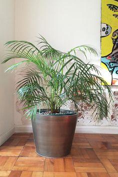 Las Mejores 49 Ideas De Plantas En Maceta Para Decoración De Interiores Plantas En Maceta Plantas De Interior Maceta