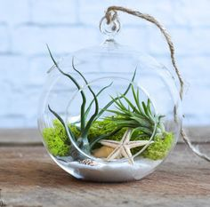 Sea Scape Terrarium showcases the easy-to-care-for funky air plants.