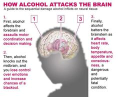 This is the order in which #Alcohol causes damage to your brain. #AlcoholAddiction
