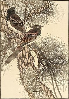 Imao Keinen Red Pine, Japanese Paradise Flycatcher Color woodblock, 1891.