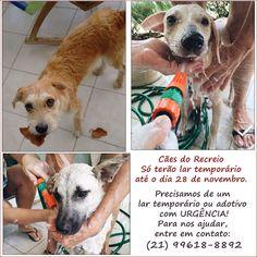 G.A.R.R.A. - Grupo de Ação, Resgate e Reabilitação Animal: Notícia dos três cães abandonados no Recreio - Pre...