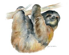 Sloth Watercolor Painting Giclee Print 11 x 14 by SusanWindsor, $24.00