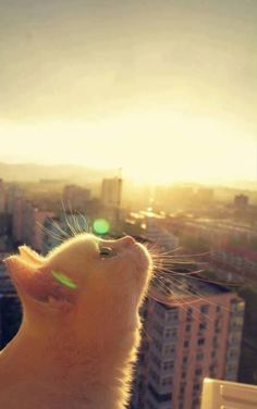 Cat and city