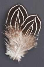 Lewis Pheasant Feathers   Atlantic Salmon Fly Tying Materials   Classic Salmon Fly Tying Materials