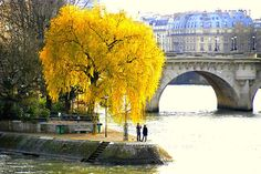 Autumn at Vert Galant  on  the western tip of the Isle de la Cite, this park is reputed to be one of the more romantic spots in Paris with views of the Left Bank and Louvre,