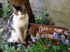 Cat from Deurne Belgium