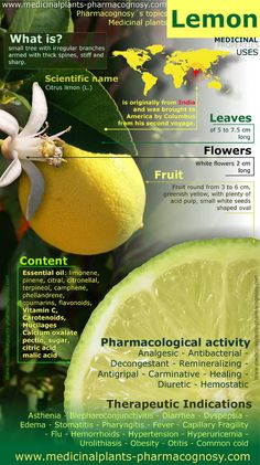 Lemon tree health benefits. Infographic - Pharmacognosy - Medicinal Plants