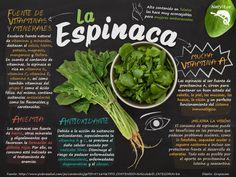 Esta verdura es un multivitamínico natural que nos ayuda a prevenir muchas enfermedades degenerativas, promueve el transporte y depósito de oxígeno en los tejidos, aumenta la fuerza muscular, ayuda a bajar de peso, favorece el tránsito intestinal, beneficia a mujeres embarazadas y niños, mejora la visión y mantiene la presión arterial balanceada. #nutricion #verduras #frutas #alimentos #salud #beneficios #tips #saludable #espinaca