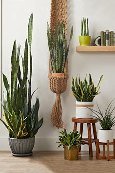 If you're a new plant parent, here are eight of the best indoor succulents to buy as you start your collection. They adapt well to life on the inside and are easy to find at garden centers and nurseries. #easyhouseplants #easysucculentplants #indoorsucculents #succulentdecor #bhg