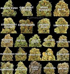 Preference? #weedstagram #weedstagram420 #weed #weedporn #weedlife #marijuana…
