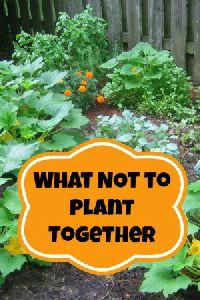 Companion Planting -…