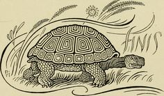 """Image from page 194 of """"The fables of Æsop, selected, told anew and their history traced"""" Archive Books, Boston Public Library, Image Please, Aesop, Book Images, Tortoise, The Selection, Fairy Tales, History"""