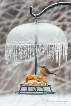 Mrs.Wren is dining happily underneath the beautiful crystal chandelier. Donna's Corner
