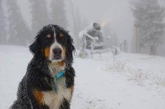 Silverton Colorado winter 2015 - Google Search