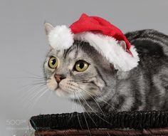 Happy Holidays! by ElizabethE #animals #animal #pet #pets #animales #animallovers #photooftheday #amazing #picoftheday