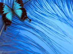 Wallpaper of Beautiful Butterflies for fans of Butterflies.