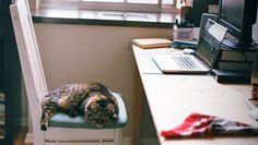 cat in desk chair
