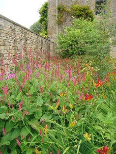 Wonderful planting - fabulous bright colours - Geranium ' Patricia'' Persicaria and Hemerocallis ' Stafford'. Dan Pearson planting @ http://nickycorkerton.co.uk/