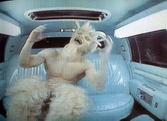 Matthew Barney - Cremaster Cycle  Discover the coolest shows in New York at www.artexperience...