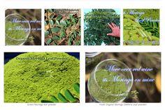 Healing Moringa Tree LLC - www.HealingMoringaTree.com