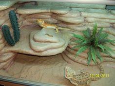 Best Ideas Bearded Dragon Habitat 097