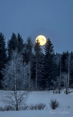 Winter Moonlight Finland by Asko Kuittinen Moon Pictures, Nature Pictures, Shoot The Moon, Image Nature, Moon Photography, Winter Scenery, Beautiful Moon, Snow Scenes, Winter Beauty