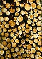 Willow the fast growing fire wood. Meet your heating needs with acre of willow trees. Sustainable Energy, Sustainable Living, Permaculture, Growing Tree, Fast Growing, Farm Business, Business Ideas, Natural Farming, Cash Crop