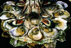 Oysters have lots of benefits #istra #istria #croatia #adriatic #sea #food #oyster #oysters
