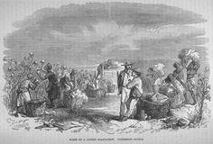 Cotton Plantation, U.S. South (?), mid- 19th cent.