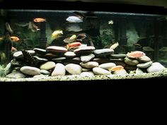 cichlid diy rock decor just use silicone and smooth flat pebbles.