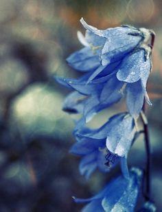 blue flowers | Tumblr